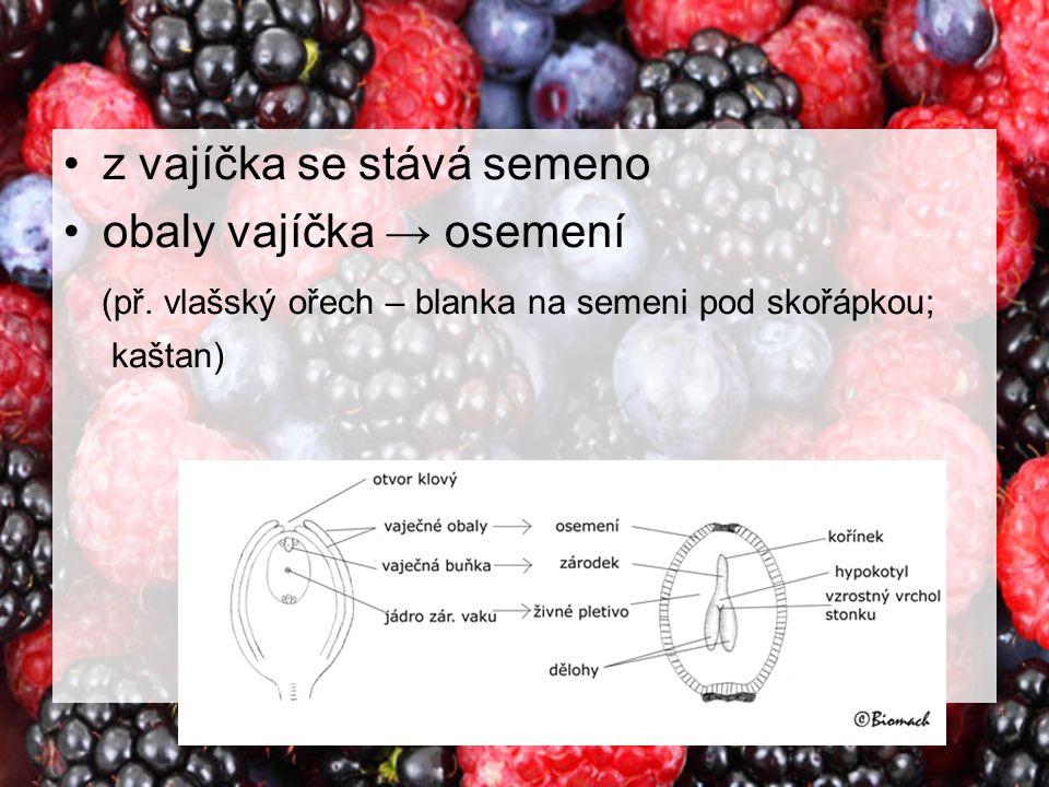 z vajíčka se stává semeno obaly vajíčka → osemení (př. vlašský ořech – blanka na semeni pod skořápkou; kaštan)