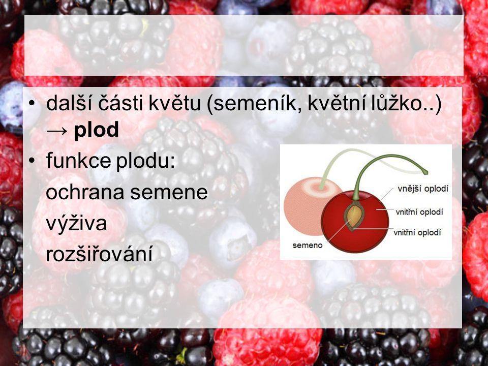 další části květu (semeník, květní lůžko..) → plod funkce plodu: ochrana semene výživa rozšiřování