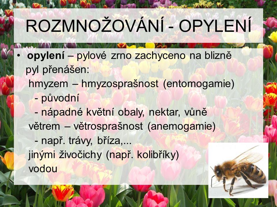 ROZMNOŽOVÁNÍ - OPYLENÍ opylení – pylové zrno zachyceno na blizně pyl přenášen: hmyzem – hmyzosprašnost (entomogamie) - původní - nápadné květní obaly,
