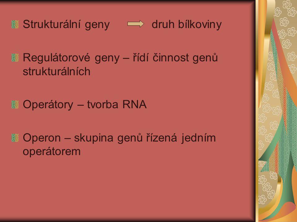 Strukturální geny druh bílkoviny Regulátorové geny – řídí činnost genů strukturálních Operátory – tvorba RNA Operon – skupina genů řízená jedním operátorem