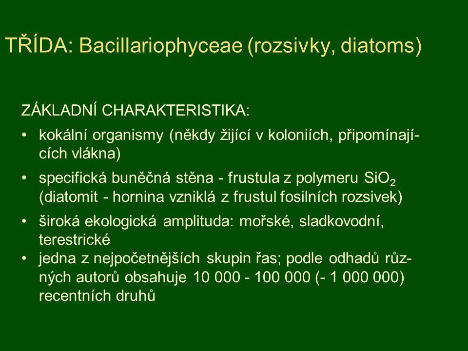 ZÁKLADNÍ CHARAKTERISTIKA: kokální organismy (někdy žijící v koloniích, připomínají- cích vlákna) specifická buněčná stěna - frustula z polymeru SiO 2
