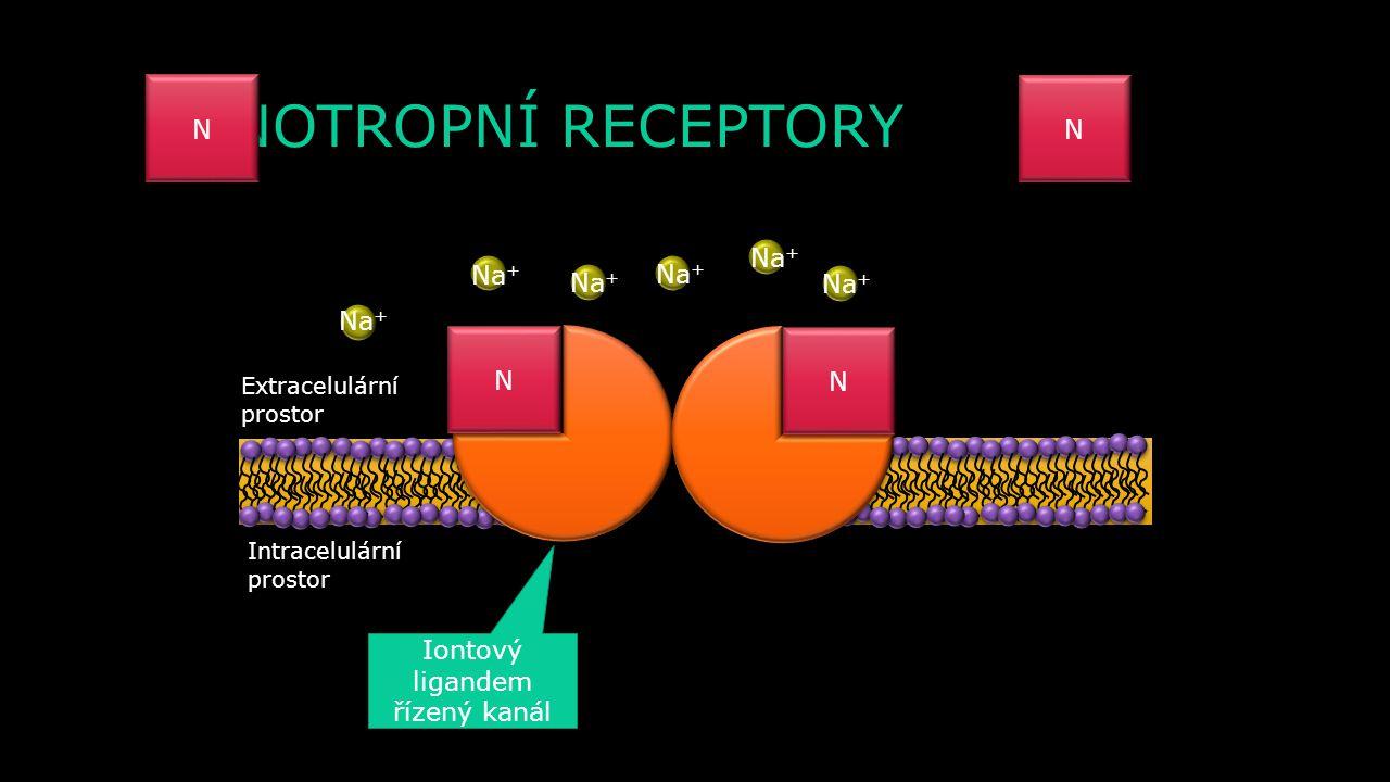 AP N NN N N N N N N N Ca 2+ Na + γ β α GDP GTP ALC cAMP EPSP Ca 2+ N N NN N N N N N N N N N N N GTP γ β Ca 2+ Na +
