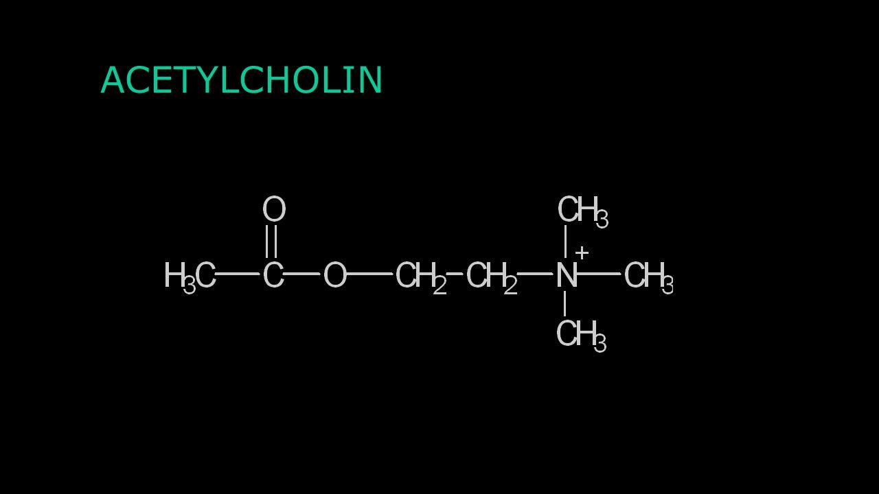 Agonisté a antagonisté Agonista: Cykloserin Antagonista: Strychnin