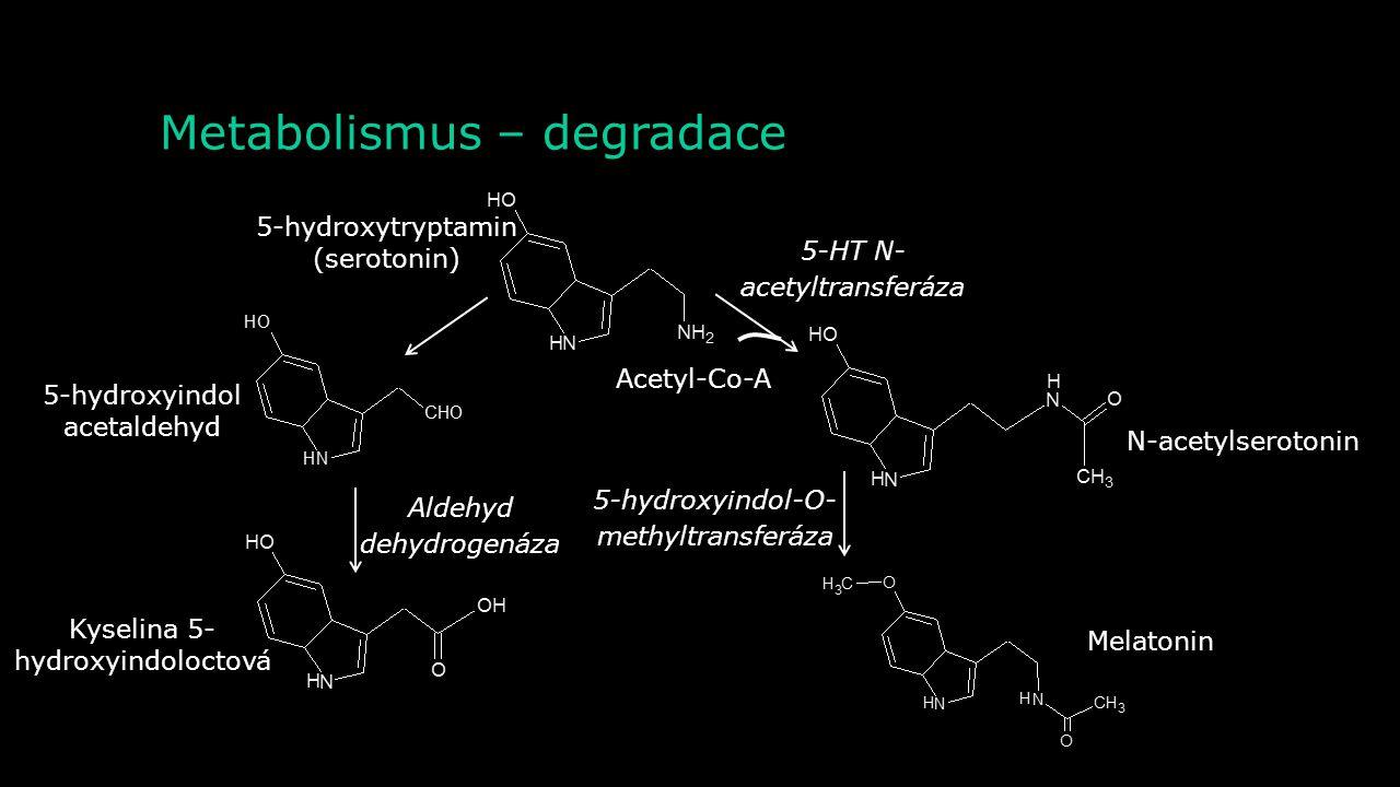 Metabolismus – syntéza Tryptofanhy droxyláza Tryptofan5-hydroxytryptofan 5-hydroxytryptamin (serotonin) Dekarboxyláza L- aromatických aminokyselin