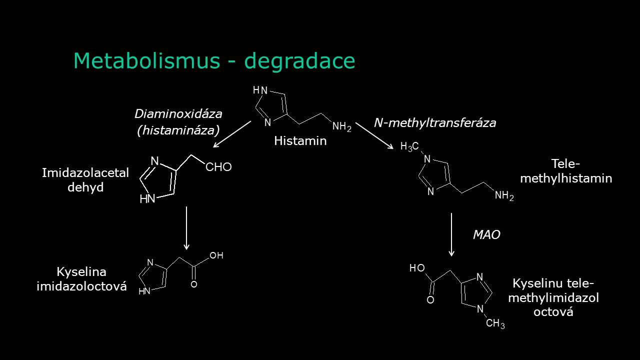 Metabolismus - syntéza Histidin Histamin Histadindekarboxyláza