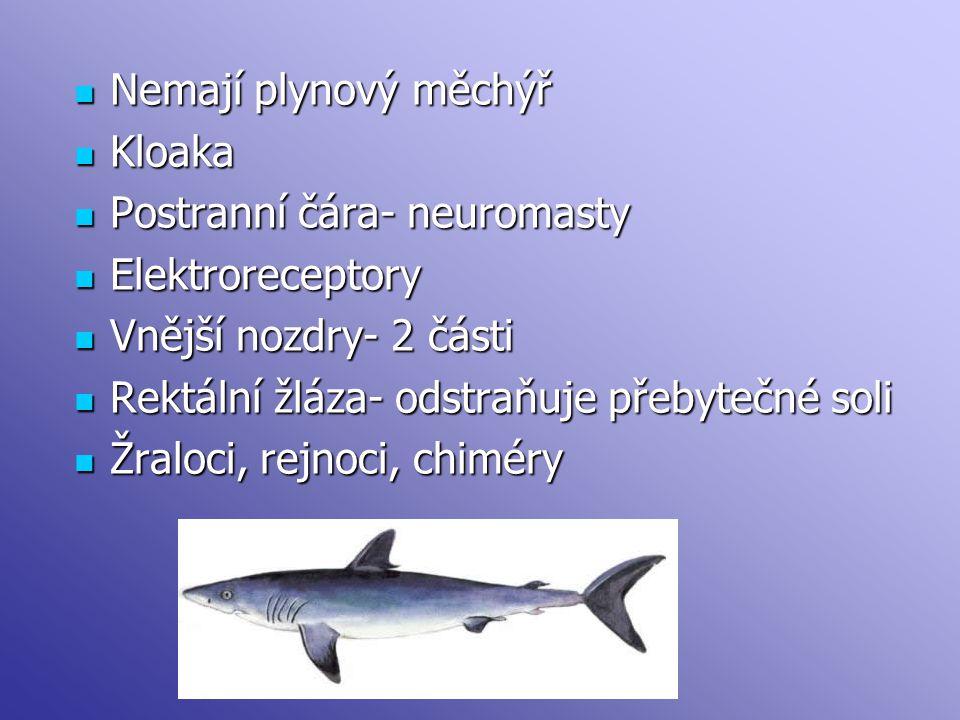 Nemají plynový měchýř Nemají plynový měchýř Kloaka Kloaka Postranní čára- neuromasty Postranní čára- neuromasty Elektroreceptory Elektroreceptory Vnější nozdry- 2 části Vnější nozdry- 2 části Rektální žláza- odstraňuje přebytečné soli Rektální žláza- odstraňuje přebytečné soli Žraloci, rejnoci, chiméry Žraloci, rejnoci, chiméry