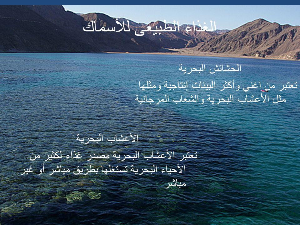 لوت من أسماك البحر المتوسط الاسم العلمى : Argyrosomus regius الاسم الانجليزى : Meagre اللوت من الأسماك المفترسة