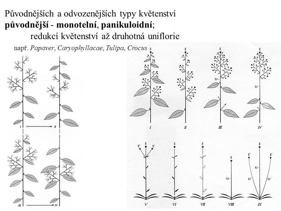 Původnějších a odvozenějších typy květenství původnější - monotelní, panikuloidní; redukcí květenství až druhotná uniflorie např. Papaver, Caryophylla