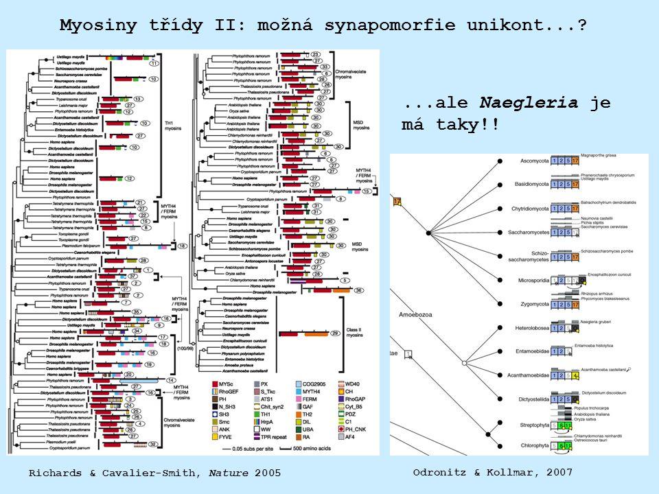 Myosiny třídy II: možná synapomorfie unikont...? Richards & Cavalier-Smith, Nature 2005...ale Naegleria je má taky!! Odronitz & Kollmar, 2007