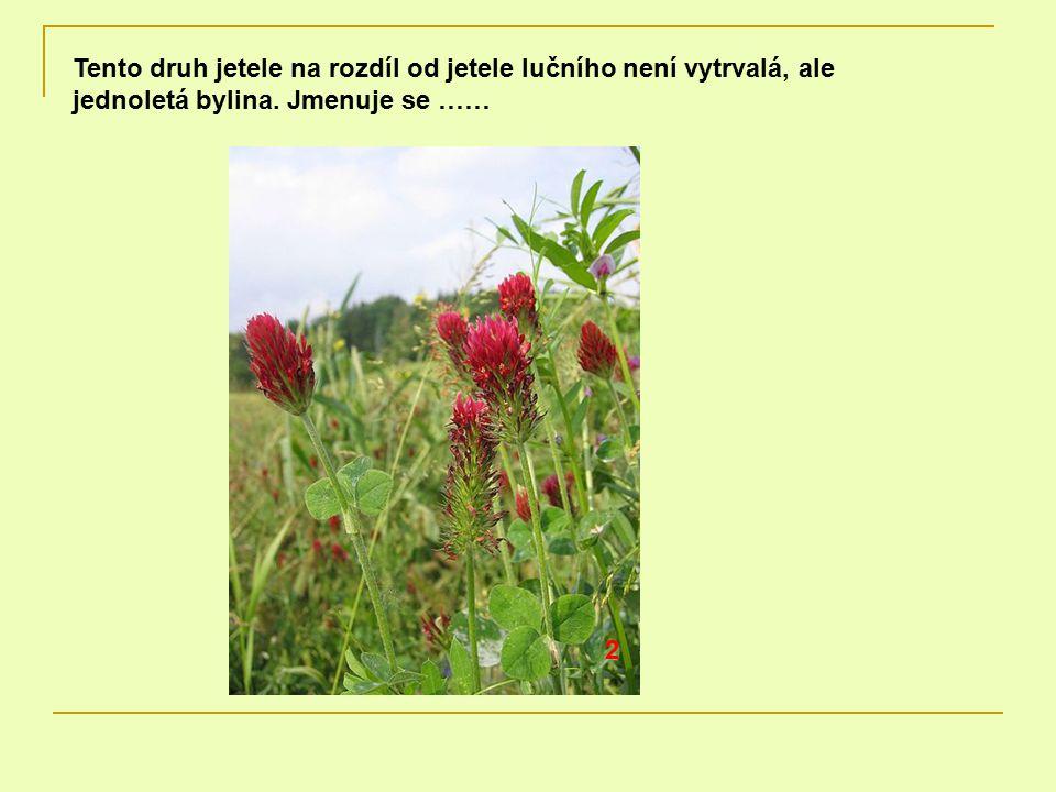 Tento druh jetele na rozdíl od jetele lučního není vytrvalá, ale jednoletá bylina. Jmenuje se …… 2