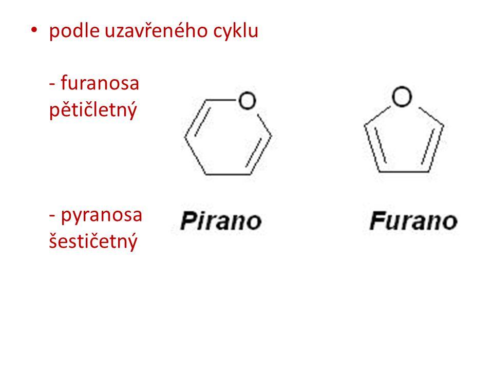 podle uzavřeného cyklu - furanosa pětičletný - pyranosa šestičetný