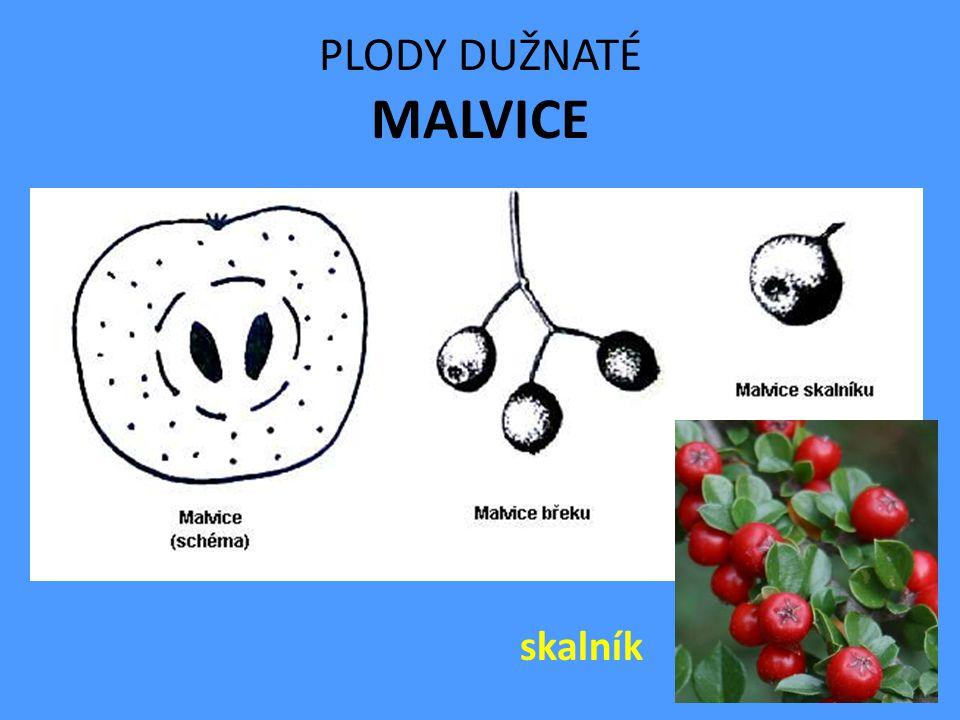 PLODY DUŽNATÉ MALVICE jeřáb hrušeň jabloň