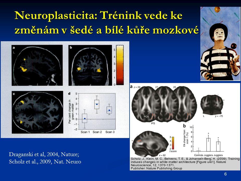 Neuroplasticita: Trénink vede ke změnám v šedé a bílé kůře mozkové 6 Draganski et al, 2004, Nature; Scholz et al., 2009, Nat. Neuro