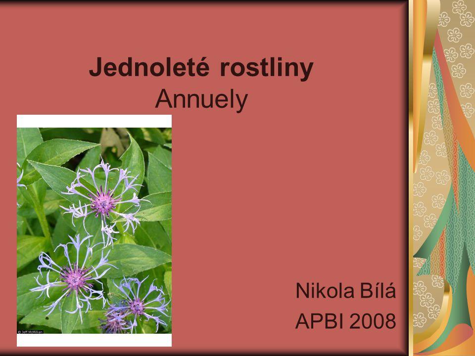 Jednoleté rostliny Annuely Nikola Bílá APBI 2008
