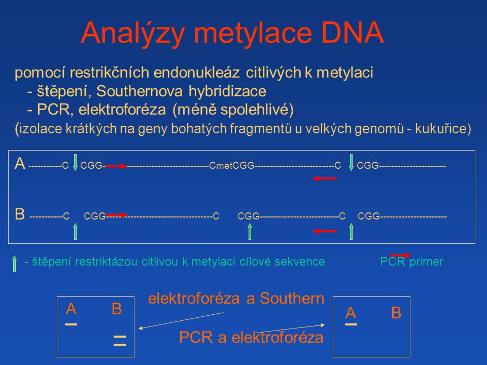 Analýzy metylace DNA 1.hydrogensiřitanová modifikace, 2.shotgun sequencing nebo PCR + sekvenace 1.