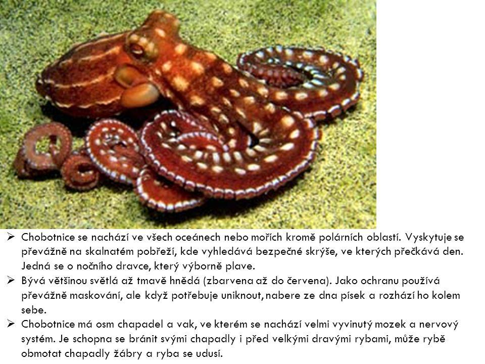  Chobotnice se nachází ve všech oceánech nebo mořích kromě polárních oblastí. Vyskytuje se převážně na skalnatém pobřeží, kde vyhledává bezpečné skrý