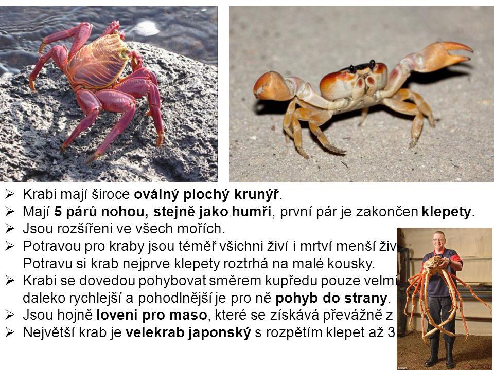  Krabi mají široce oválný plochý krunýř.  Mají 5 párů nohou, stejně jako humři, první pár je zakončen klepety.  Jsou rozšířeni ve všech mořích.  P