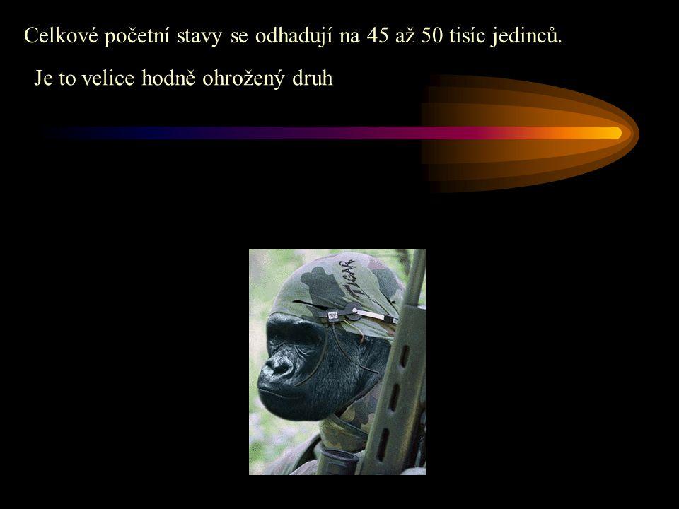 Celkové početní stavy se odhadují na 45 až 50 tisíc jedinců. Je to velice hodně ohrožený druh