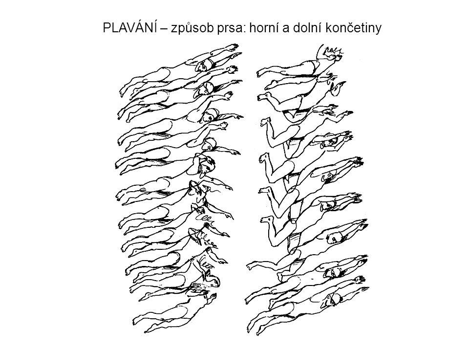 PLAVÁNÍ – způsob prsa: horní a dolní končetiny