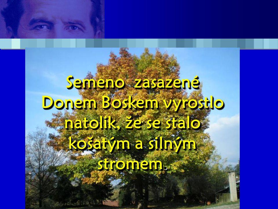 Semeno zasazené Donem Boskem vyrostlo natolik, že se stalo košatým a silným stromem.