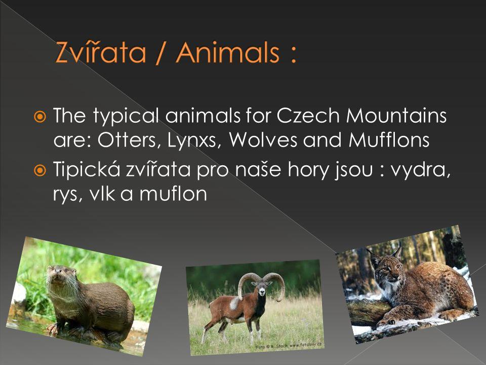  The typical animals for Czech Mountains are: Otters, Lynxs, Wolves and Mufflons  Tipická zvířata pro naše hory jsou : vydra, rys, vlk a muflon