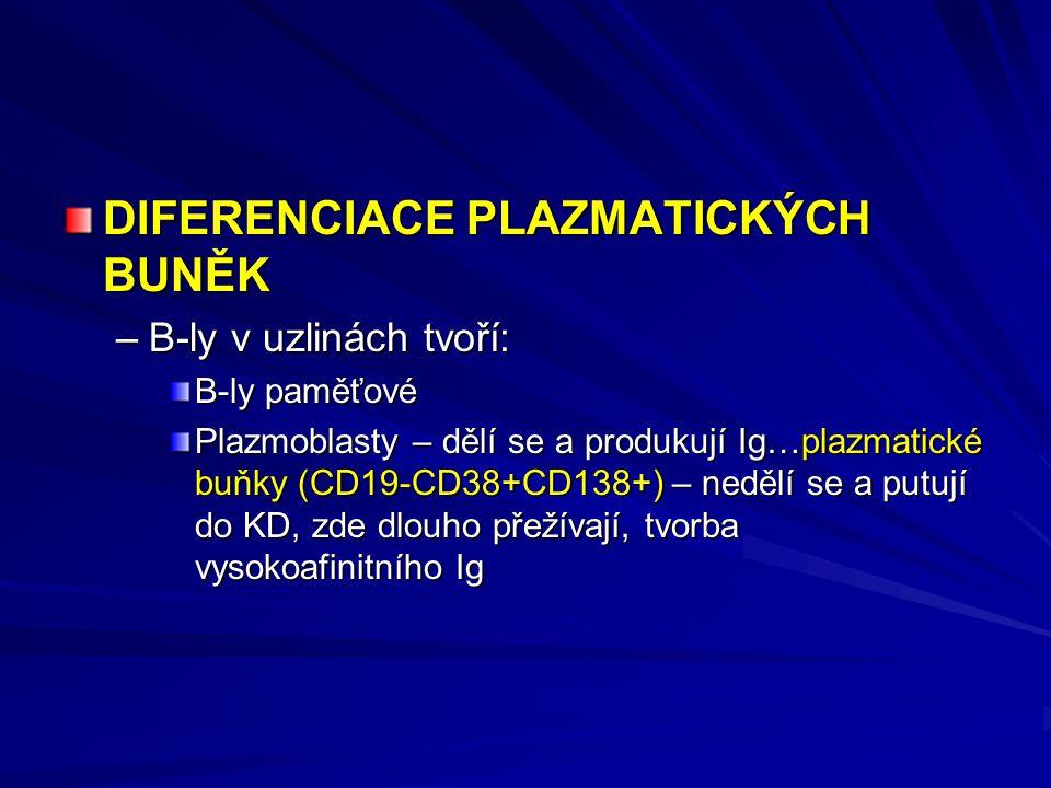 DIFERENCIACE PLAZMATICKÝCH BUNĚK –B-ly v uzlinách tvoří: B-ly paměťové Plazmoblasty – dělí se a produkují Ig…plazmatické buňky (CD19-CD38+CD138+) – nedělí se a putují do KD, zde dlouho přežívají, tvorba vysokoafinitního Ig