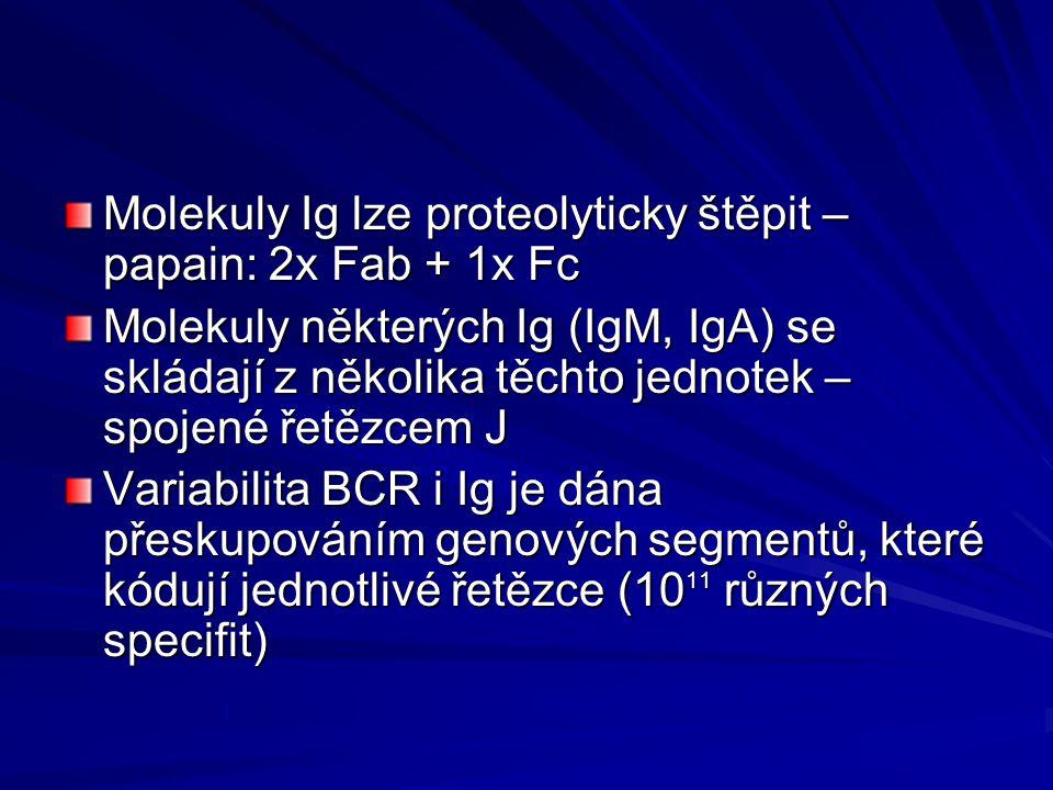 Molekuly Ig lze proteolyticky štěpit – papain: 2x Fab + 1x Fc Molekuly některých Ig (IgM, IgA) se skládají z několika těchto jednotek – spojené řetězcem J Variabilita BCR i Ig je dána přeskupováním genových segmentů, které kódují jednotlivé řetězce (10 11 různých specifit)