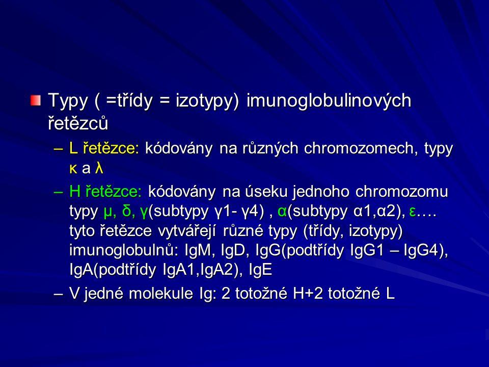 Typy ( =třídy = izotypy) imunoglobulinových řetězců –L řetězce: kódovány na různých chromozomech, typy κ a λ –H řetězce: kódovány na úseku jednoho chromozomu typy μ, δ, γ(subtypy γ1- γ4), α(subtypy α1,α2), ε….