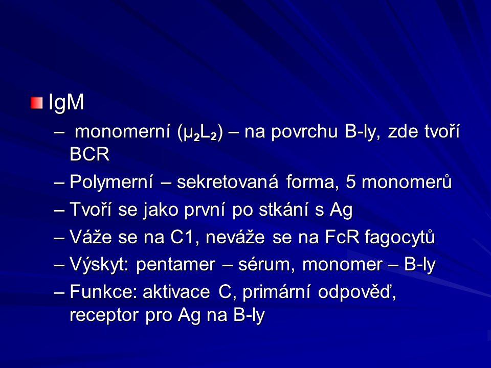 IgM – monomerní (μ 2 L 2 ) – na povrchu B-ly, zde tvoří BCR –Polymerní – sekretovaná forma, 5 monomerů –Tvoří se jako první po stkání s Ag –Váže se na C1, neváže se na FcR fagocytů –Výskyt: pentamer – sérum, monomer – B-ly –Funkce: aktivace C, primární odpověď, receptor pro Ag na B-ly