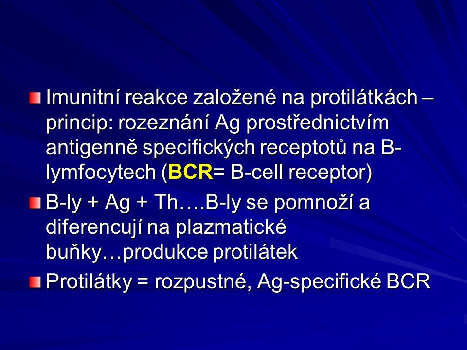Imunitní reakce založené na protilátkách – princip: rozeznání Ag prostřednictvím antigenně specifických receptotů na B- lymfocytech (BCR= B-cell receptor) B-ly + Ag + Th….B-ly se pomnoží a diferencují na plazmatické buňky…produkce protilátek Protilátky = rozpustné, Ag-specifické BCR