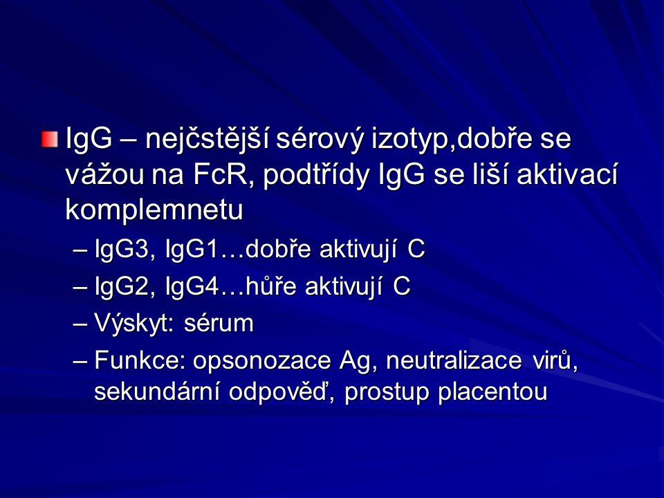 IgG – nejčstější sérový izotyp,dobře se vážou na FcR, podtřídy IgG se liší aktivací komplemnetu –IgG3, IgG1…dobře aktivují C –IgG2, IgG4…hůře aktivují