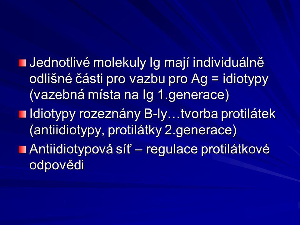 Jednotlivé molekuly Ig mají individuálně odlišné části pro vazbu pro Ag = idiotypy (vazebná místa na Ig 1.generace) Idiotypy rozeznány B-ly…tvorba protilátek (antiidiotypy, protilátky 2.generace) Antiidiotypová síť – regulace protilátkové odpovědi