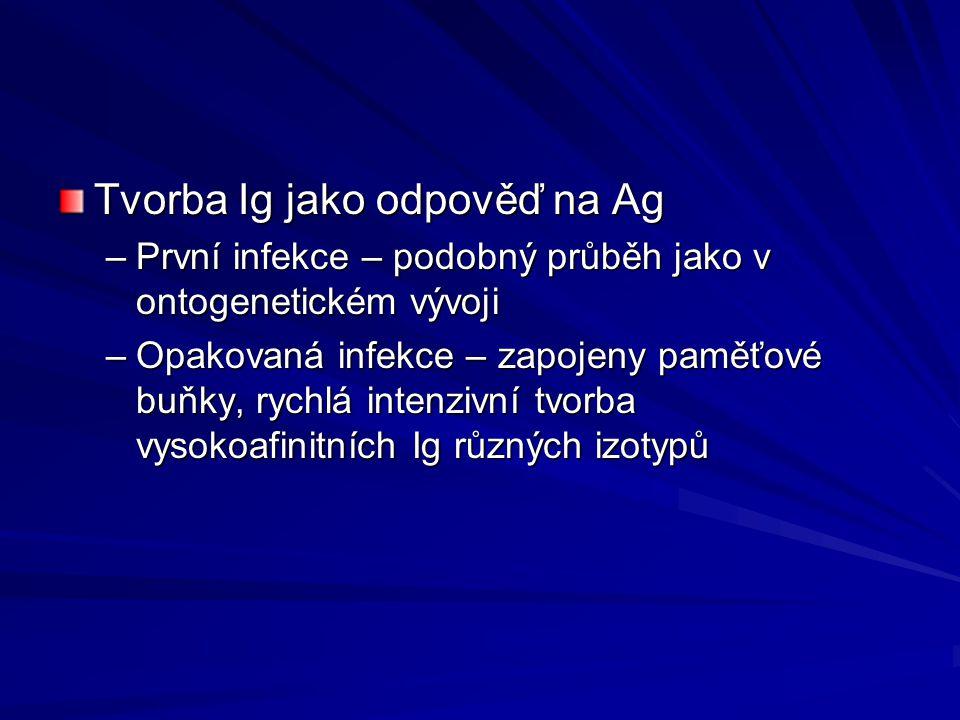 Tvorba Ig jako odpověď na Ag –První infekce – podobný průběh jako v ontogenetickém vývoji –Opakovaná infekce – zapojeny paměťové buňky, rychlá intenzi