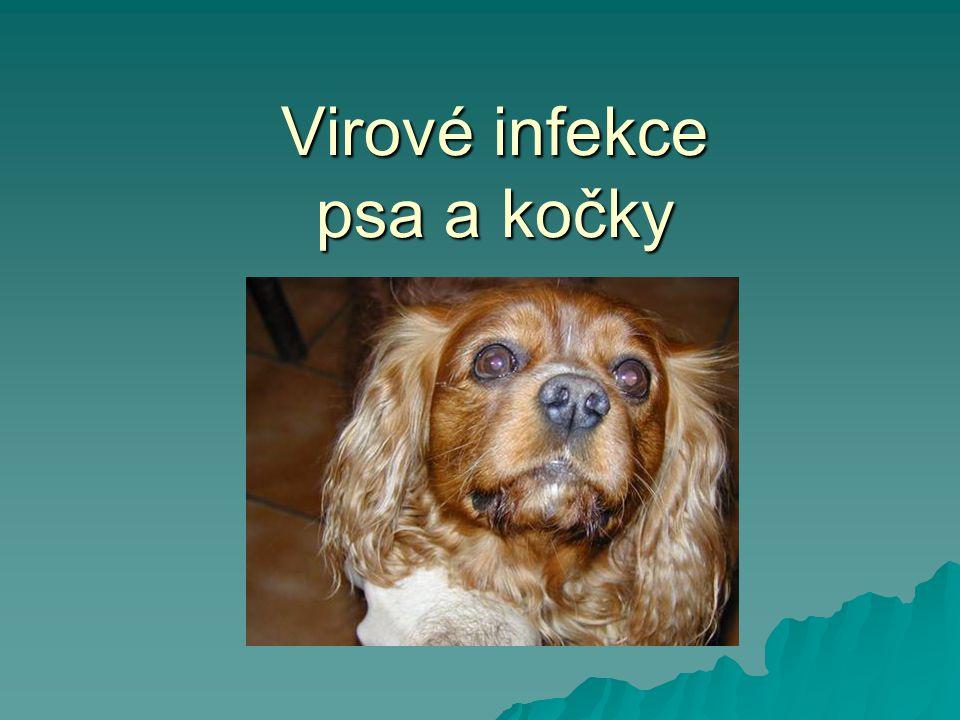 Respirační trakt - viry  Psinka  Adenovirus psa typ 2  Virus parainfluenzy