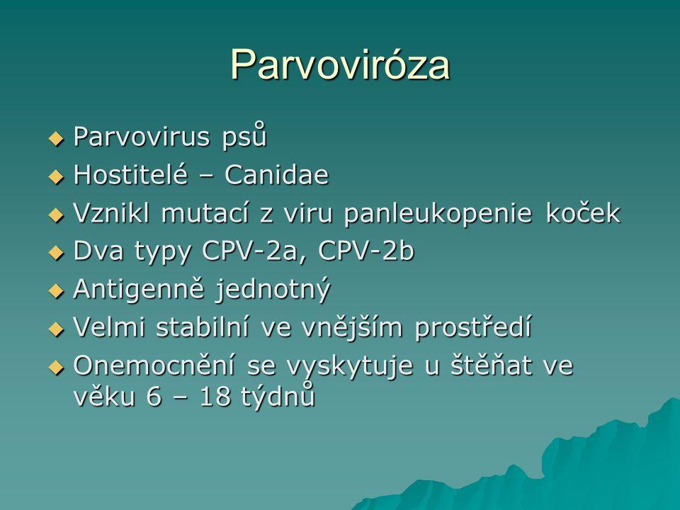 Parvoviróza  Parvovirus psů  Hostitelé – Canidae  Vznikl mutací z viru panleukopenie koček  Dva typy CPV-2a, CPV-2b  Antigenně jednotný  Velmi s