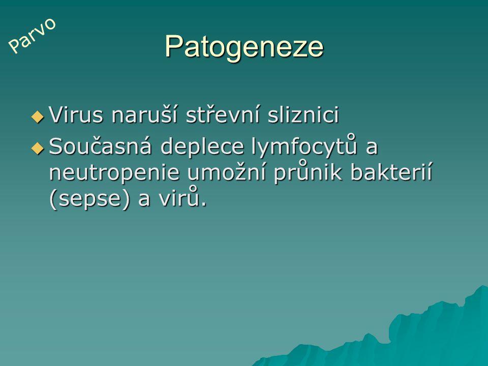 Patogeneze  Virus naruší střevní sliznici  Současná deplece lymfocytů a neutropenie umožní průnik bakterií (sepse) a virů. Parvo
