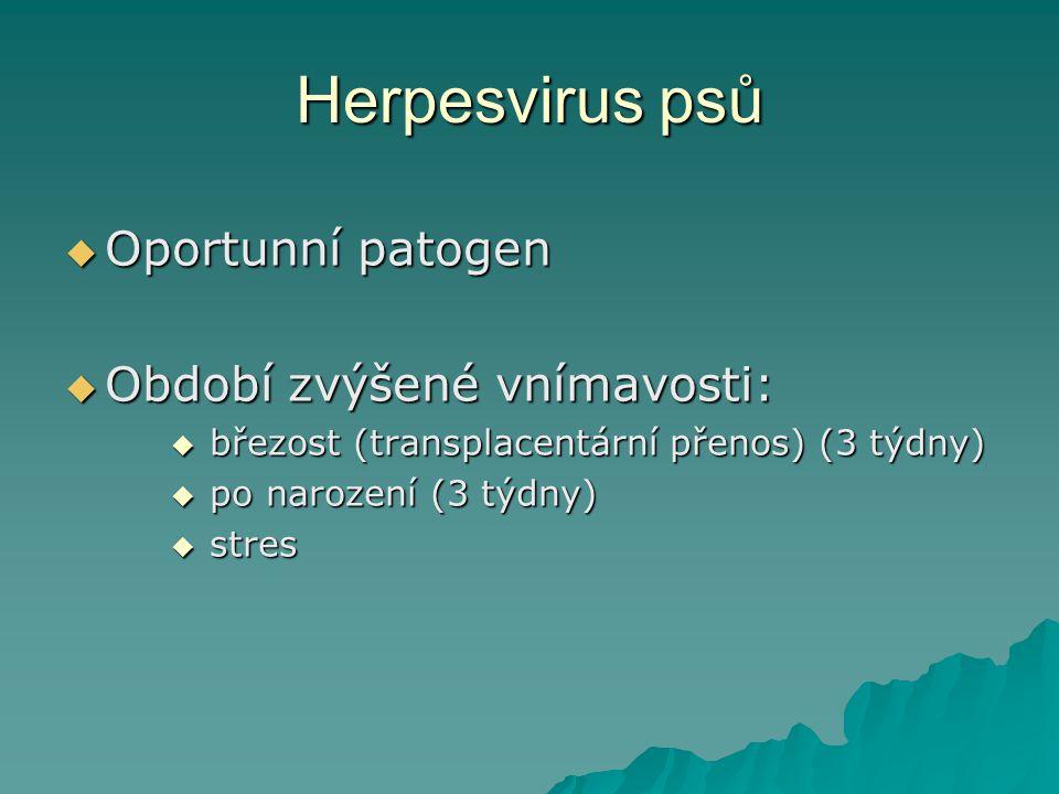 Herpesvirus psů  Oportunní patogen  Období zvýšené vnímavosti:  březost (transplacentární přenos) (3 týdny)  po narození (3 týdny)  stres