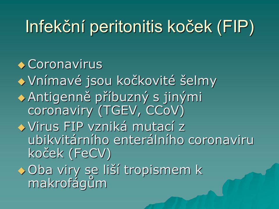 Infekční peritonitis koček (FIP)  Coronavirus  Vnímavé jsou kočkovité šelmy  Antigenně příbuzný s jinými coronaviry (TGEV, CCoV)  Virus FIP vzniká