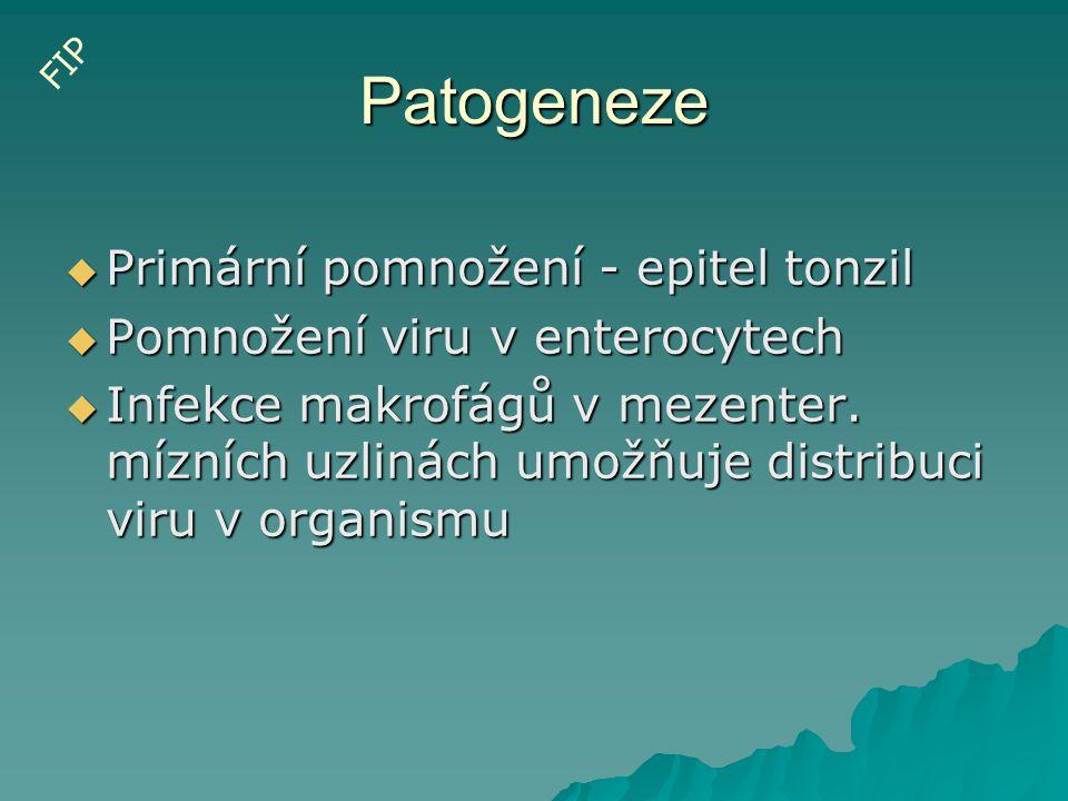 Patogeneze  Primární pomnožení - epitel tonzil  Pomnožení viru v enterocytech  Infekce makrofágů v mezenter. mízních uzlinách umožňuje distribuci v
