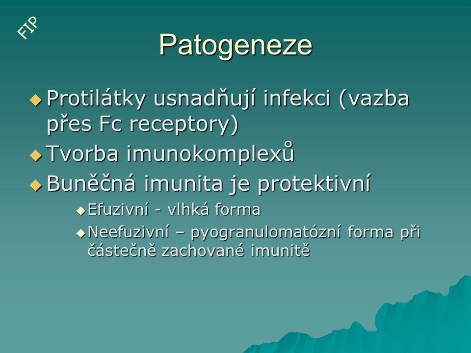 Patogeneze  Protilátky usnadňují infekci (vazba přes Fc receptory)  Tvorba imunokomplexů  Buněčná imunita je protektivní  Efuzivní - vlhká forma 
