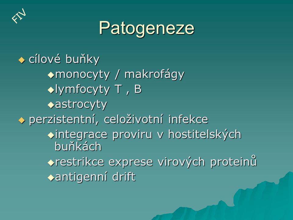 Patogeneze  cílové buňky  monocyty / makrofágy  lymfocyty T, B  astrocyty  perzistentní, celoživotní infekce  integrace proviru v hostitelských