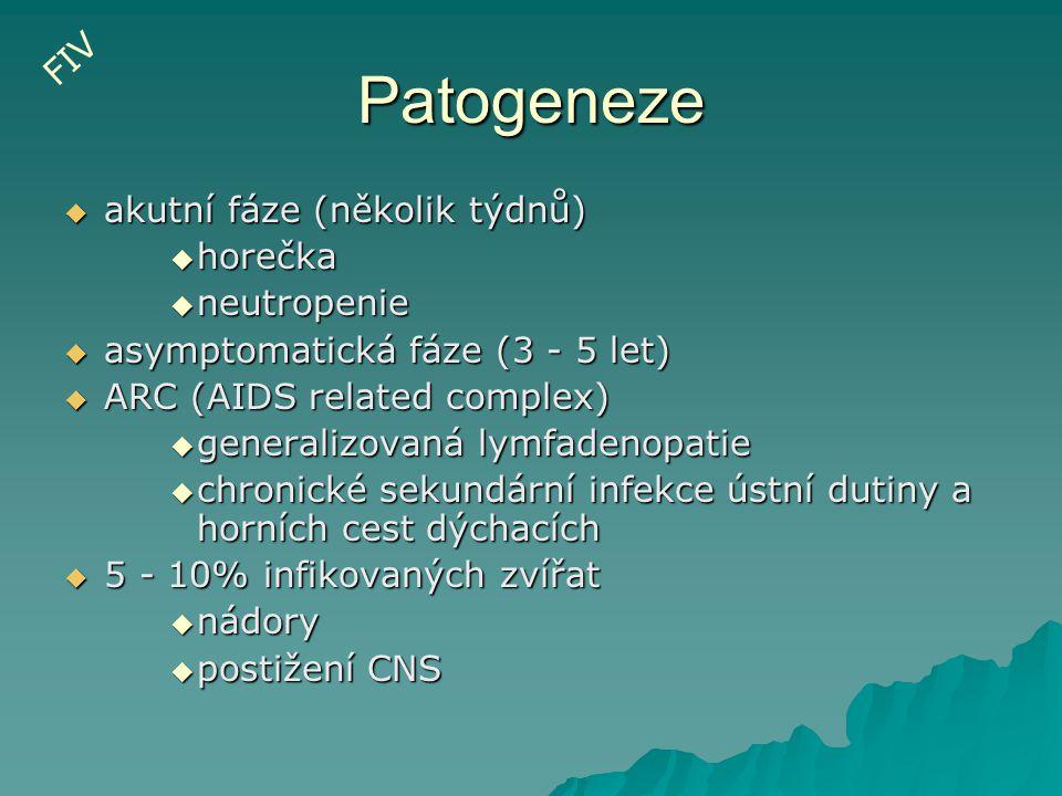 Patogeneze  akutní fáze (několik týdnů)  horečka  neutropenie  asymptomatická fáze (3 - 5 let)  ARC (AIDS related complex)  generalizovaná lymfa