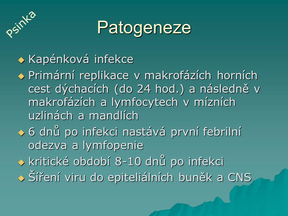 Patogeneze  Kapénková infekce  Primární replikace v makrofázích horních cest dýchacích (do 24 hod.) a následně v makrofázích a lymfocytech v mízních