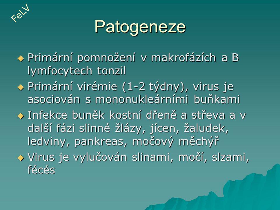 Patogeneze  Primární pomnožení v makrofázích a B lymfocytech tonzil  Primární virémie (1-2 týdny), virus je asociován s mononukleárními buňkami  In