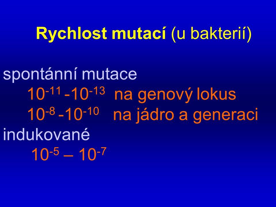Rychlost mutací (u bakterií) spontánní mutace 10 -11 -10 -13 na genový lokus 10 -8 -10 -10 na jádro a generaci indukované 10 -5 – 10 -7