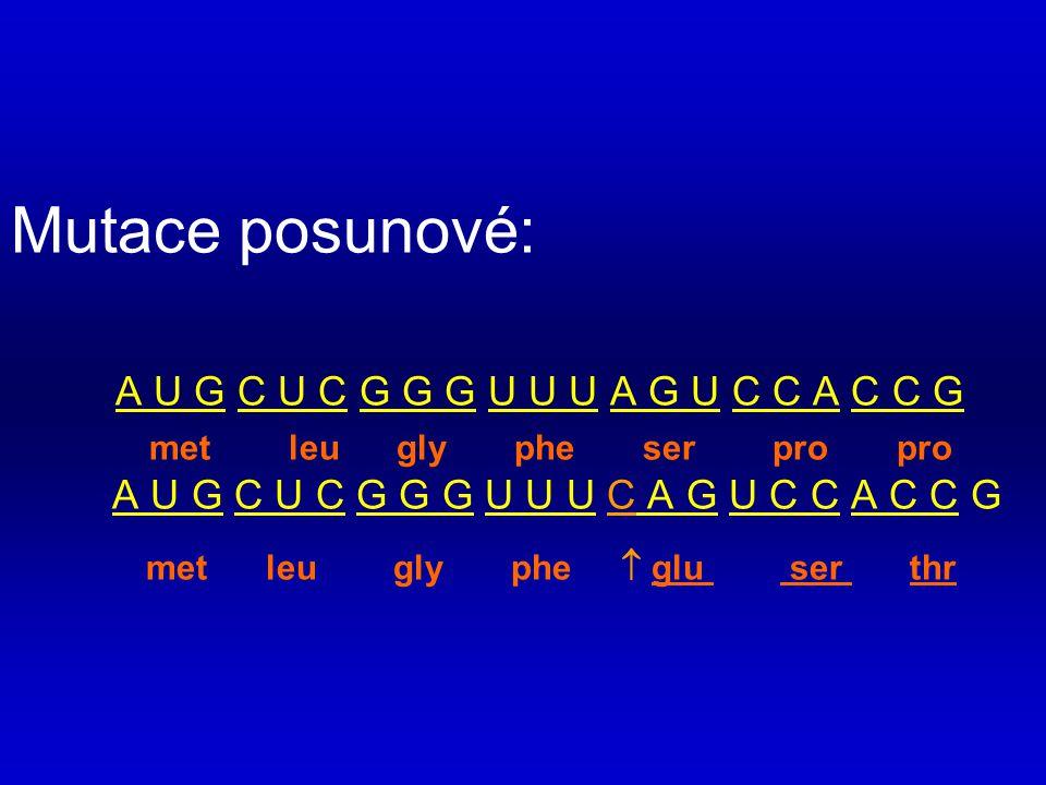 Mutace posunové: A U G C U C G G G U U U A G U C C A C C G met leu gly phe ser pro pro A U G C U C G G G U U U C A G U C C A C C G met leu gly phe  g