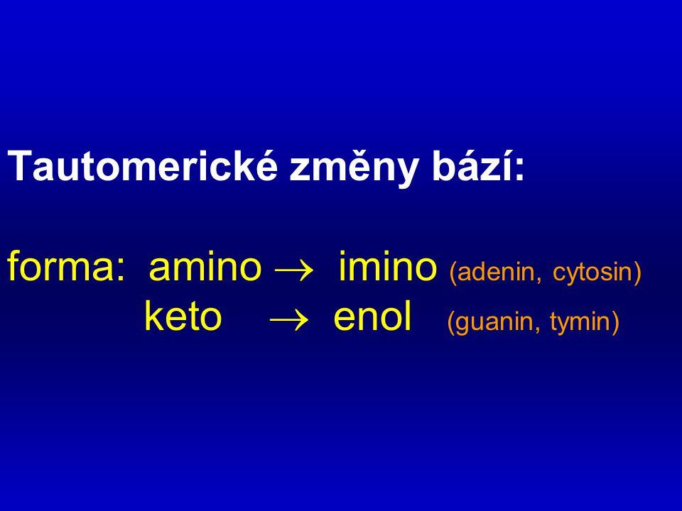 Tautomerické změny bází: forma: amino  imino (adenin, cytosin) keto  enol (guanin, tymin)