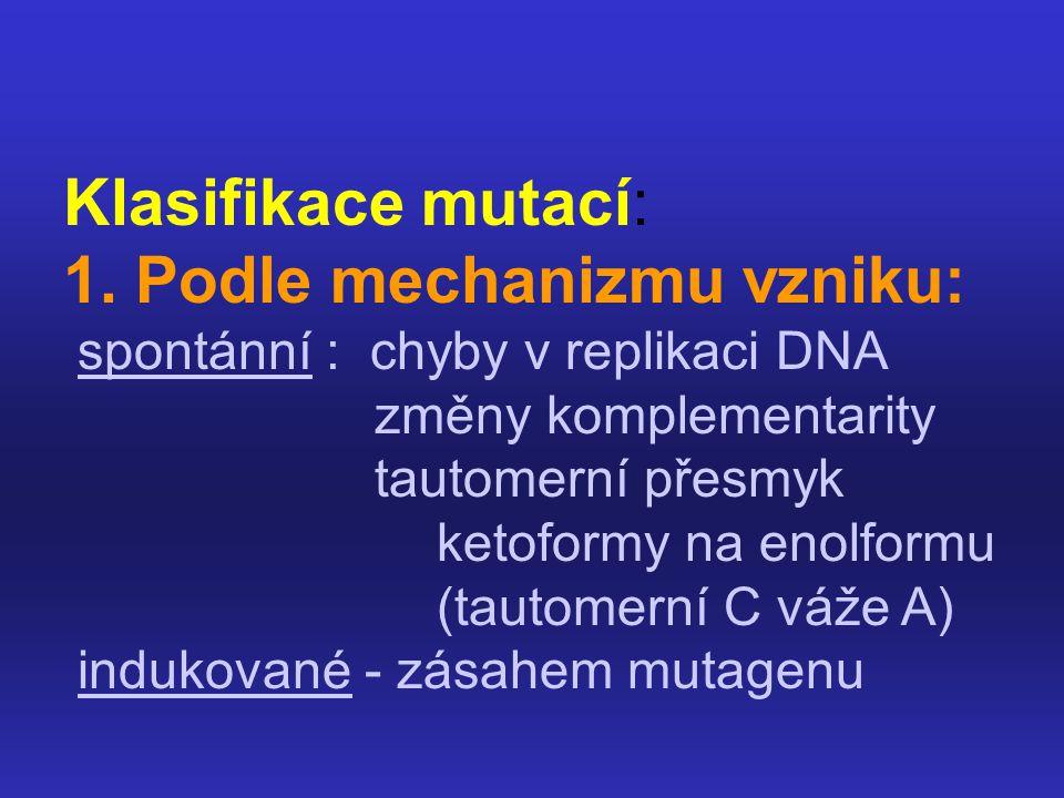Klasifikace mutací: 1. Podle mechanizmu vzniku: spontánní : chyby v replikaci DNA změny komplementarity tautomerní přesmyk ketoformy na enolformu (tau