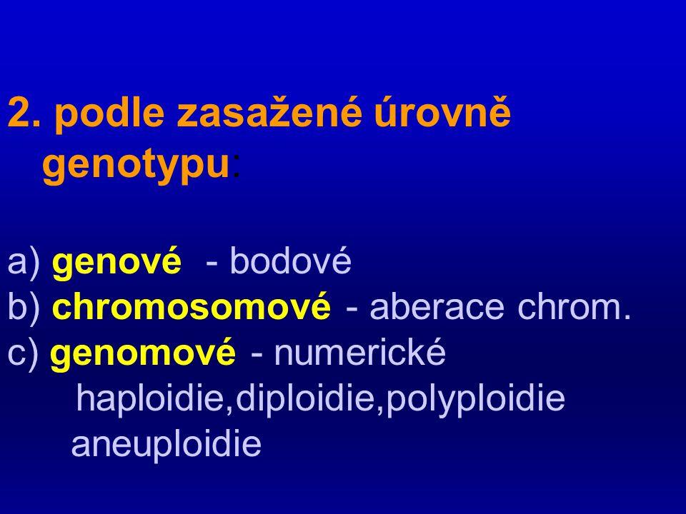 2. podle zasažené úrovně genotypu: a) genové - bodové b) chromosomové - aberace chrom. c) genomové - numerické haploidie,diploidie,polyploidie aneuplo