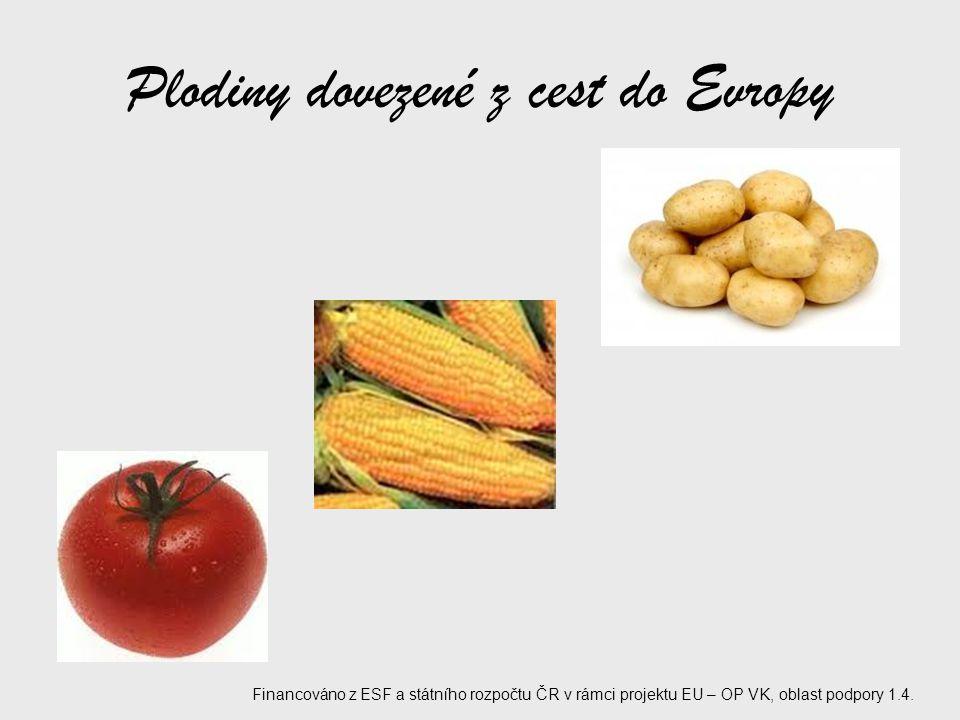 Plodiny dovezené z cest do Evropy Financováno z ESF a státního rozpočtu ČR v rámci projektu EU – OP VK, oblast podpory 1.4.